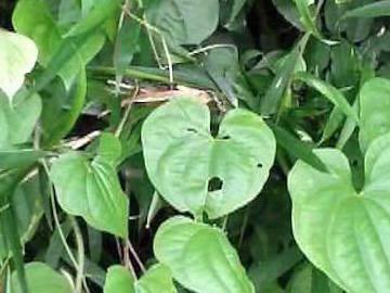 穴あき葉っぱさがしの写真