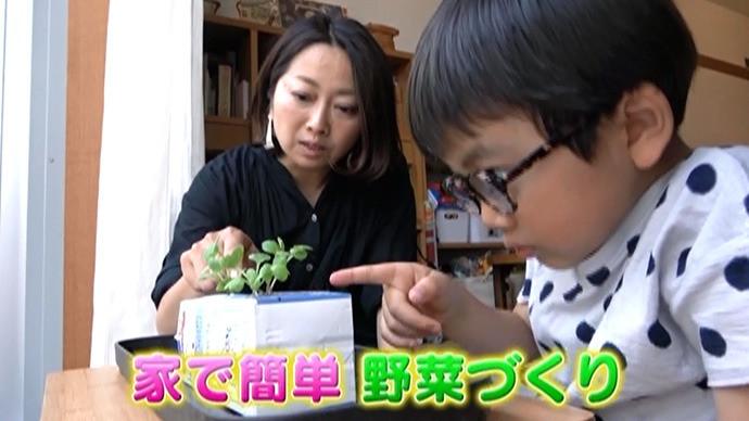 子どもといっしょに野菜をつくろう!(1)お部屋の中で小さな畑